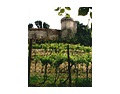 布雷西亚葡萄酒