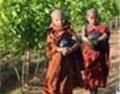 缅甸第一家葡萄酒园Aythaya获如潮好评