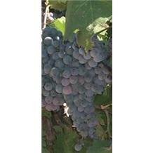 《中国葡萄酒》(2008上半年)2008年1月刊 - 2008年6月刊
