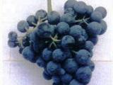 阿根廷门多萨葡萄酒庄游
