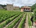 PAGO葡萄酒的乐园—记西班牙ARINZANO酒庄
