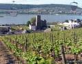 穿越时空的美酒之旅——探访德国葡萄酒产区