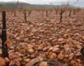 生活随天地 饮食归自然——西班牙EXTREMADURA大区走访录 (上)