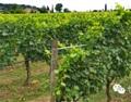 意大利葡萄酒的那些事儿——意大利酒庄探访(二)