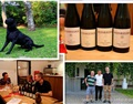 欧洲酒乡之旅——奥地利WEINRIEDER