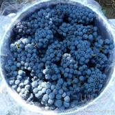新鲜赤霞珠/白玉霓/蛇龙珠酿酒葡萄批发