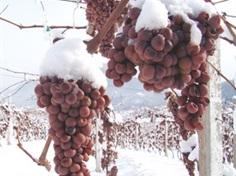 中国冰葡萄酒起源地2日游