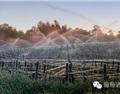 法国昨夜低温霜害,从葡萄园战况复习早霜的防护措施