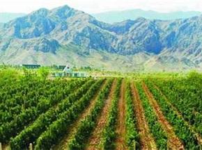 对宁夏发展葡萄酒旅游的建议