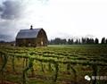 美国最值得去的葡萄酒产区排名前十