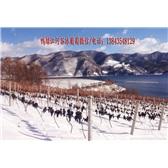集安冰葡萄酒 鸭绿江河谷冰葡萄酒