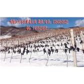 集安福海酒庄冰葡萄酒 北冰红葡萄苗 北冰红葡萄酒