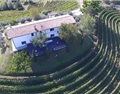 最有意思的意大利产区2-弗留利Friuli
