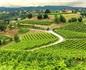 普洛塞克产区为推行农业可持续认证禁用三种农药