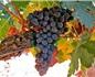 五点看懂里奥哈葡萄酒