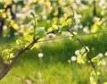 葡萄春季科学管理需知八个关键