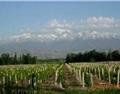 王德惠:一个正在崛起的葡萄酒明星产区