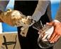 """克罗地亚首次推出""""海底陈年""""葡萄酒"""