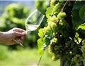 春天适合喝什么葡萄酒?