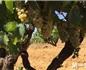 2017南非干旱之年葡萄酒出色的年份