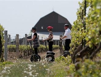 尼亚加拉的葡萄园和酒厂成为中国人的投资热点