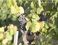 葡萄酒风格是如何形成的