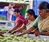 开挂的国度——印度的葡萄酒