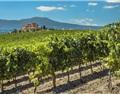 全球变暖威胁葡萄酒产业 西班牙南部或将成沙漠