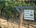 林殿理:有机葡萄酒,酒庄的噱头还是新加分项?