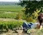 第一个把佳美娜品种写在酒标上的智利先驱酒庄