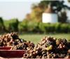 真菌感染葡萄酿酒实验测试论文发表