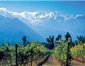 中国和巴西助力智利葡萄酒出口