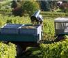 2017年德国各产区葡萄酒产量统计