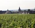 日本,勃艮第葡萄酒充满新机遇的市场
