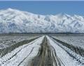 阿根廷葡萄酒业:悠久而坎坷的历史,铸就自身诸多优点