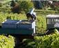 2017年德国13大葡萄酒产区采收报告