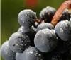 法国博若莱10大特级村葡萄酒的风格与配餐指南