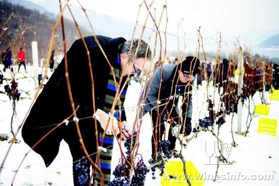2017集安鸭绿江河谷冰葡萄酒节举行