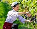 地产大佬绿城集团强势进军国产葡萄酒,到底意欲何为?