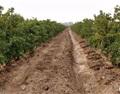 宁夏葡萄酒产业:论现状,看未来