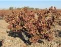 2017年,西班牙干旱的一年