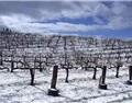 寂静中孕育生机,看冰封中的葡萄园美景!