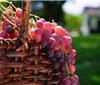 纵览:我国6大葡萄主产区分析