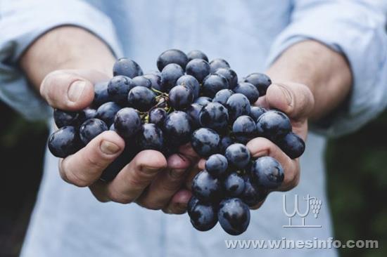 52-grapes-640x427.jpg