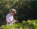 中国是智利葡萄酒首要目的地 丹麦韩国需求大幅增长