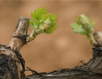 西班牙两葡萄酒产区将首次联合在中国展开宣传活动