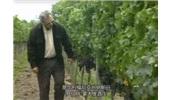 【纪录片】葡萄酒指南