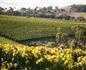 中国成澳大利亚奥兰治地区葡萄酒第一大出口市场