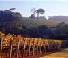 一起来探索澳洲七大优质葡萄酒产区