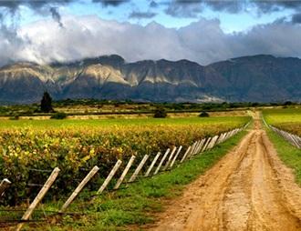 玻利维亚高海拔葡萄酒正在征服海外市场